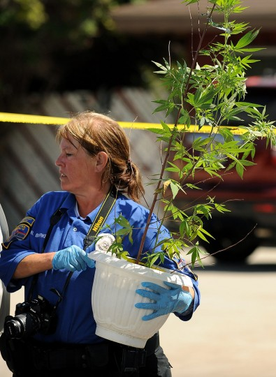 June 17, 2012: Rialto police technician Noretta Barker carries a marijuana plant out of the house of Rodney King, who was found dead Sunday in Rialto, California. (Wally Skalij/Los Angeles Times/MCT)