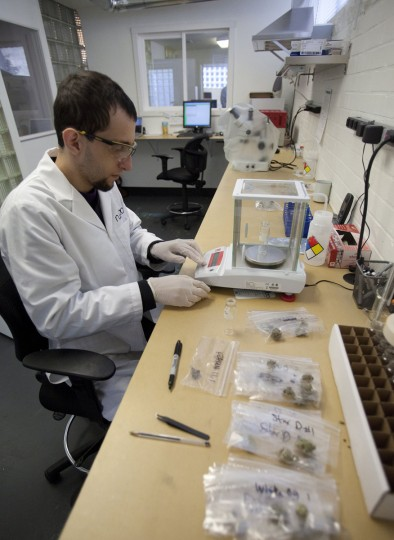 September 26, 2012: Northwest Botanical Analysis in Seattle, Washington, is one of a handful of labs specializing in testing medical marijuana, providing quality control for an unregulated industry. (Steve Ringman/Seattle Times/MCT)