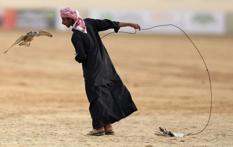 "A falcon participates during the first day of the Abu Dhabi Falconry 400m competitions in Al Wathba, Abu Dhabi. The competition, known as ""Al Tilwah"" requires the falcons to take off from a starting point and fly the distance of 400m to catch their prey, held by a participant guiding the falcon at the finish line by waving a rope with the prey, usually quail, at the end of it. (Jumana El Heloueh/Reuters)"
