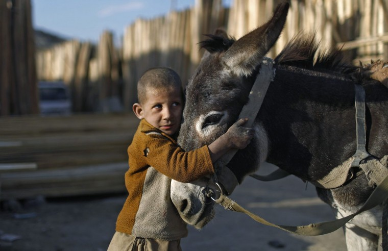 An Afghan boy stands next to his donkey cart outside a timber market in Kabul. (Adnan Abidi/Reuters)