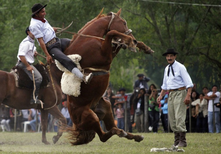 A gaucho rides an untamed horse during Tradition Day celebrations in San Antonio de Areco, some 72.5 miles north of Buenos Aires, November 11, 2012. Gauchos take part in the mass festival, which commemorates the birth anniversary of Jose Hernandez, one of Argentina's most important poets. (Marcos Brindicci/Reuters)