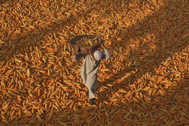 A Muslim boy carries a basket of corn as he walks over corn kept for drying, outside a mosque, at Mathwar village, 36 km (22 miles) northwest of Jammu November 8, 2012. India's corn exports may fall by nearly 40 percent in the current 2012/13 crop year, crimped by an increase in domestic demand and an expected drop in output, traders said on Thursday. (Mukesh Gupta/Reuters photo)