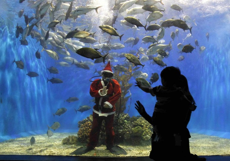 A professional diver dressed as Santa Claus gestures at a visitor inside a giant aquarium as part of celebrations for Christmas at the Manila Ocean Park. The Philippines, a mainly Roman Catholic country in Southeast Asia, prepares for Christmas early - shopping malls play Christmas carols in September and lanterns and fireworks are put up in early December. (Romeo Ranoco/Reuters photo)