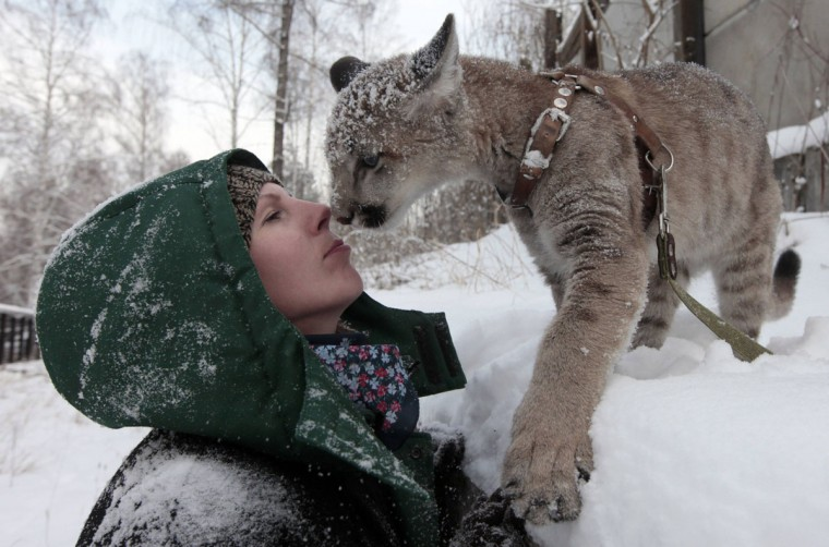 Ice, a 5-month-old North American Puma female cub, plays with her handler at the Royev Ruchey zoo in a surburb of Russia's Siberian city of Krasnoyarsk. (Ilya Naymushin/Reuters)