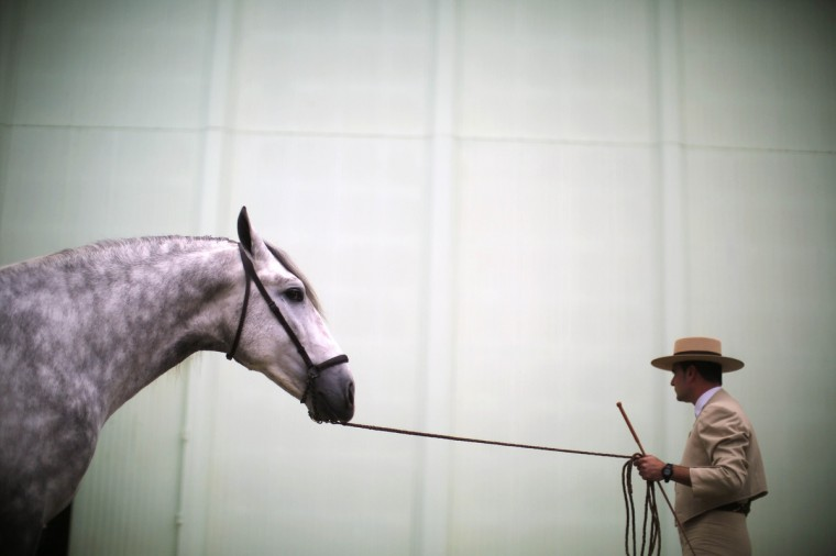 An Andalusian horseman pulls a horse by the reins during the Sicab International Pre Horse Fair in the Andalusian capital of Seville. The show runs till November 25 and is dedicated exclusively to Spanish thoroughbreds. (Marcelo del Pozo/Reuters)
