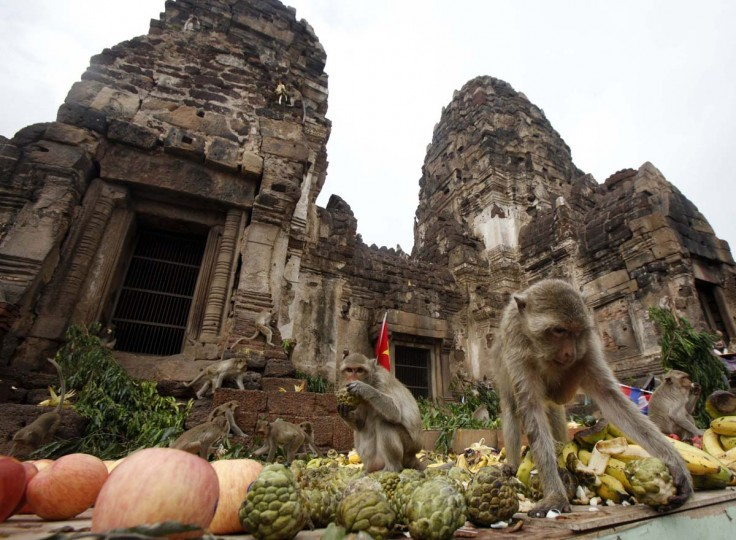 Monkeys eat fruits during the annual Monkey Buffet Festival in front of the Pra Prang Sam Yot temple in Lopburi province, 94 miles north of Bangkok, November 25, 2012. More than 4,000kg of fruits are used during the annual festival to promote tourism. (Chaiwat Subprasom/Reuters)