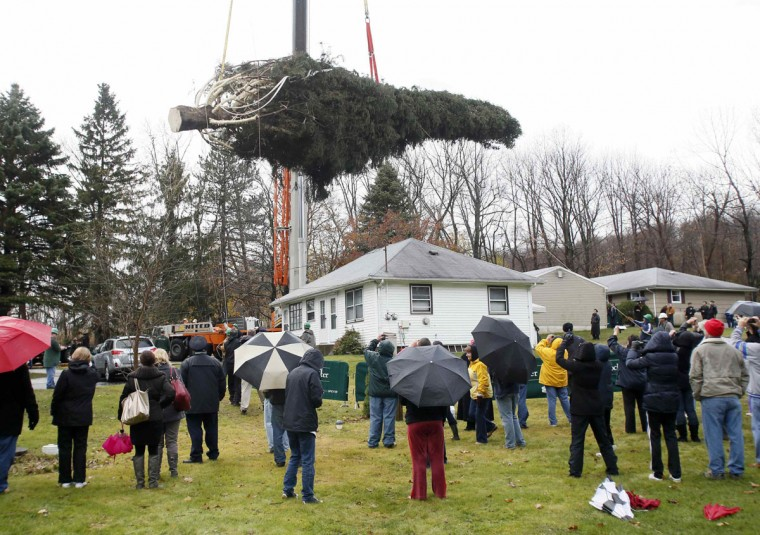 An 80-foot tall Norway Spruce, selected to be the 2012 Rockefeller Center Christmas Tree, is raised by a crane above spectators after being cut down at the home of Joseph Balku, in Flanders, New Jersey. (Stuart Ramson/Rockefeller Center/Handout/Reuters)