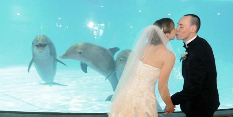 The National Aquarium was the setting for the marriage of Caroline Trowbridge and Devon Minarik of Hunt Valley, who sealed their vows in 2011 with a kiss in front of smiling dolphins. (Kim Hairston/Baltimore Sun)