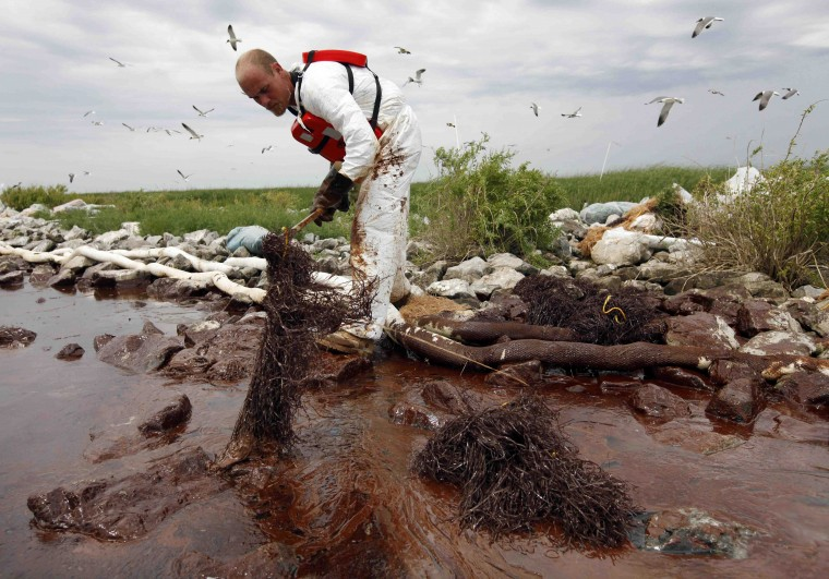 In this June 4, 2010 photo, a clean-up worker picks up an absorbent snare filled with oil on Queen Bess Island near in Plaquemines Parish, La. (AP Photo/Gerald Herbert)