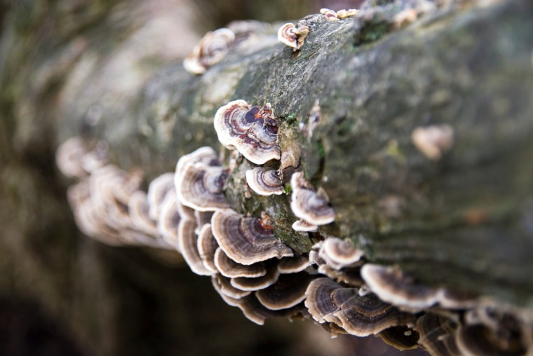"The winner for this week's Reader SunShots series ""Details"" goes to Jennifer Longo for a picture shot of fungi on a tree taken at Ladew Topiary gardens. The photographer shot the picture with a Nikon D200. Here is a critique by Baltimore Sun director of photography Robert K. Hamilton: ""Not being a botanist, I'm not quite sure what is growing on this tree, but I like how the photographer was able to use the repeating pattern combined with a shallow depth of focus to make an interesting design from the growth."""