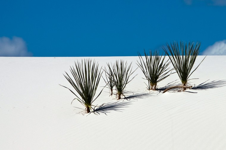 "The winner for this week's Reader SunShots series ""Somewhere warm"" goes to John Jake Jakubik for his picture shot at White Sands National Monument in New Mexico. He took the photograph with a Canon 50D. Here is a critique by Baltimore Sun director of photography Robert K. Hamilton: ""Quite often in photography less is more. Clean, simple images often are easier to read and are more compelling to look at. This picture is a prime example. By using clean composition combined with a minimum of elements, the photographer made an artistic photograph from something as simple as plants growing in a sand dune."""