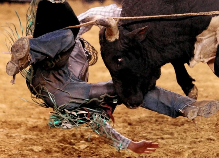 "The PBR (Professional Bull Riders) tour stopped at the 1st Mariner Arena. Bull ""Gator Bend"" eyes thrown rider Jordan Hupp during Friday night's event. (Gene Sweeney Jr./Baltimore Sun)"
