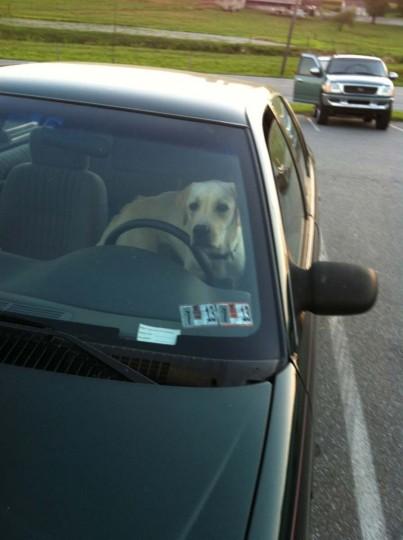 Doggie Driver: El Dorado, Kansas. (Courtesy of Freak Flag America)