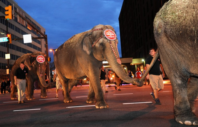 Six of Ringling Bros. and Barnum & Bailey Circus elephants arrived in Baltimore on the B&O Railroad near the B&O Museum. They paraded on Pratt St. to the 1st Mariner Arena where they will perform. (Algerina Perna/Baltimore Sun)