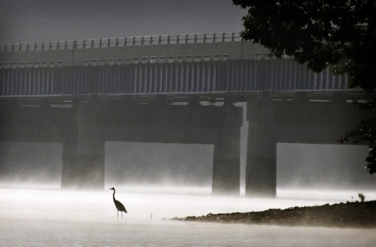 A Great Blue Heron stands along the shores of Liberty Reservoir on a foggy morning as traffic passes by on the Liberty Road bridge between Carroll and Howard County. (Robert K. Hamilton/Baltimore Sun)