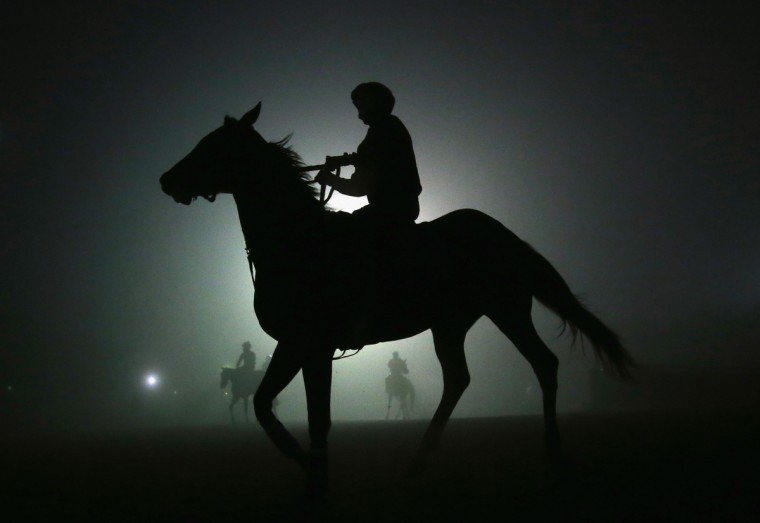 Horses walk back to the stable after training in preparation for the 2012 Breeder's Cup at Santa Anita Park on October 31, 2012 in Arcadia, California. (Jeff Gross/Getty Images)