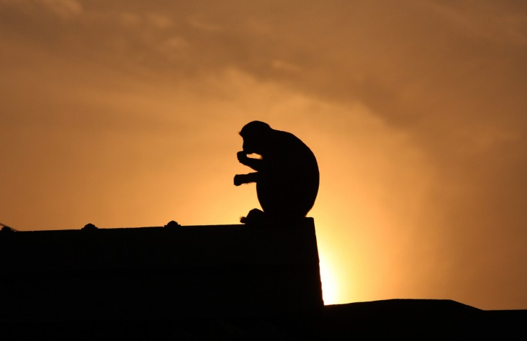 A monkey is silhouetted against the setting sun as it sits on stone slabs earmarked at Karsevak Puram workshop for the construction of a Hindu Temple in Ayodhya, on the eve of the 20th anniversary of the demolition of the Babri Masjid. India risked being torn apart by sectarian conflict 20 years ago when Hindu zealots demolished a mosque, triggering deadly riots, but analysts say economic growth has proved a quiet balm on tensions. (Sanjay Kanojia/Getty Images)