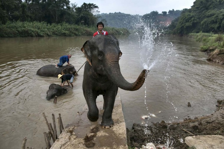 A mahout rides his elephant after bathing at an elephant camp at the Anantara Golden Triangle resort on December 10, 2012 in Golden Triangle, northern Thailand. (Paula Bronstein/Getty Images)