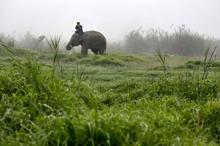 A Thai mahout rides his elephant in the early morning fog at an elephant camp at the Anantara Golden Triangle resort on December 9, 2012 in Golden Triangle, northern Thailand. (Paula Bronstein/Getty Images)