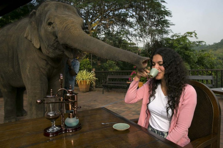 Miki Giles from Hong Kong tastes the Black Ivory Coffee at breakfast as Meena, a 6 year old baby elephant, gets curious at the Anantara Golden Triangle resort December 10, 2012 in Golden Triangle, northern Thailand. In order to demonstrate freshness and to enhance diners' senses, the coffee is ground by hand at the table and brewed using technology developed in 1840 in Austria, says Anantara Hotels, Resorts and Spas. (Paula Bronstein/Getty Images)