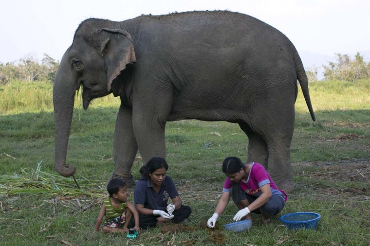 Mahout wives Niang (L) with her son Anawat, 3, and Lynda (R) pick out coffee beans from elephant dung at an elephant camp at the Anantara Golden Triangle resort in Golden Triangle, northern Thailand. (Paula Bronstein/Getty Images)