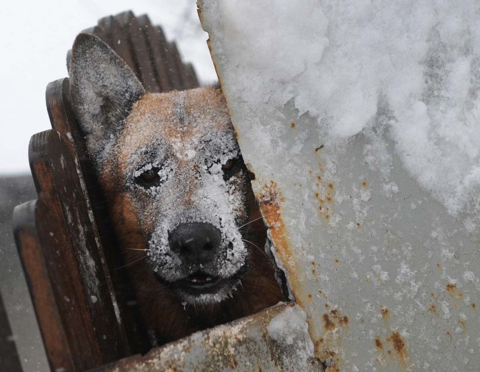 A dog shelters from a blizzard in Catelu, on the outskirts of Bucharest, on January 26, 2012. Southern Romania was paralysed by heavy snow, with dozens of national roads cut off and 28 flights to and from Bucharest's airports cancelled, Prime minister Emil Boc said. Hundreds of people, including several babies, spent the night stranded in cars, and had to be rescued by authorities in the morning. Two rail lines were closed and 28 villages were deprives of electricity and four ports were shut down. (Daniel Mihailescu/AFP/Getty Images)