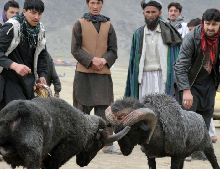 """Afghan men attend an organized ram fight in Kabul on April 27, 2012. Spring marks the start of the """"fighting season"""" for humans involved in Afghanistan's decade-long war, but for birds, dogs, camels and even kites it reaches its peak. The game, as well as dog fighting, camel-fighting and Buzkashi, are part of Afghanistan's social entertainment. (Bay Ismoyo/AFP/Getty Images)"""