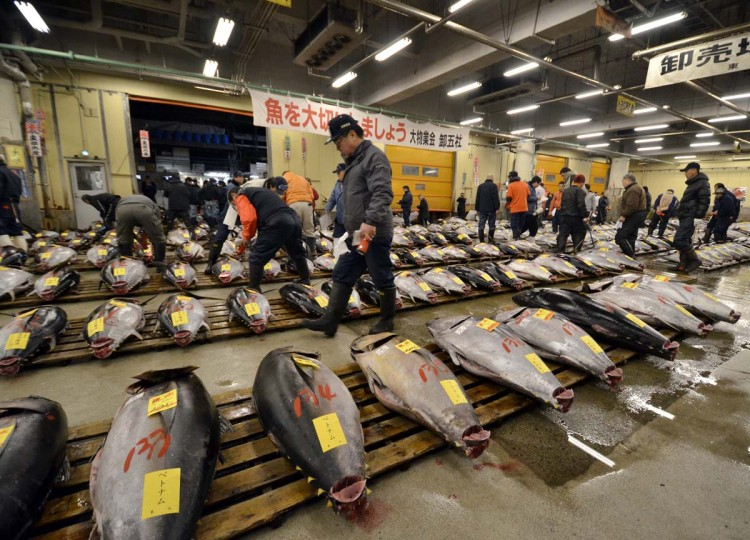 Fishmongers check large bluefin tunas before the first trading of the new year at Tokyo's Tsukiji fish market January 5, 2012. Fishing nations meet in Morocco to thrash out tuna quotas as experts urge maintaining bluefin catch limits. Hunted to the brink of extinction to feed a burgeoning sushi market, the Atlantic bluefin tuna was placed on the endangered list of the International Union for the Conservation of Nature (IUCN). (Yoshikazu Tsuno/AFP/Getty Images)