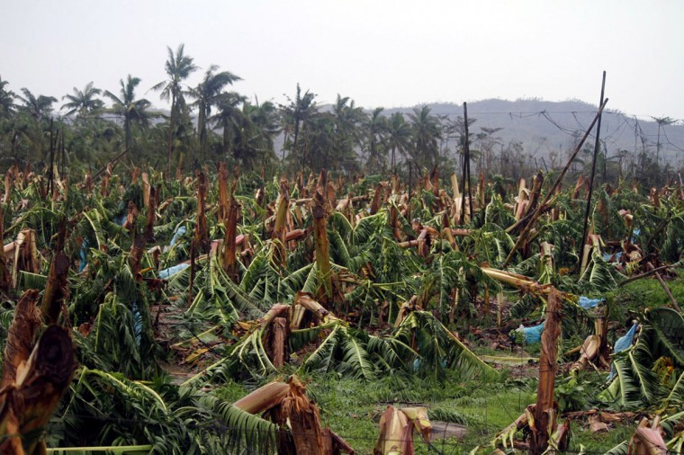 Banana trees destroyed by Typhoon Bopha are seen at a plantation in Compostela town, Compostela Valley province, in southern island of Mindanao. Typhoon Bopha killed 43 people in one hard-hit Philippine town December 4, local television station ABS-CBN reported from the scene. (Karlos Manlupig/AFP/Getty Images)