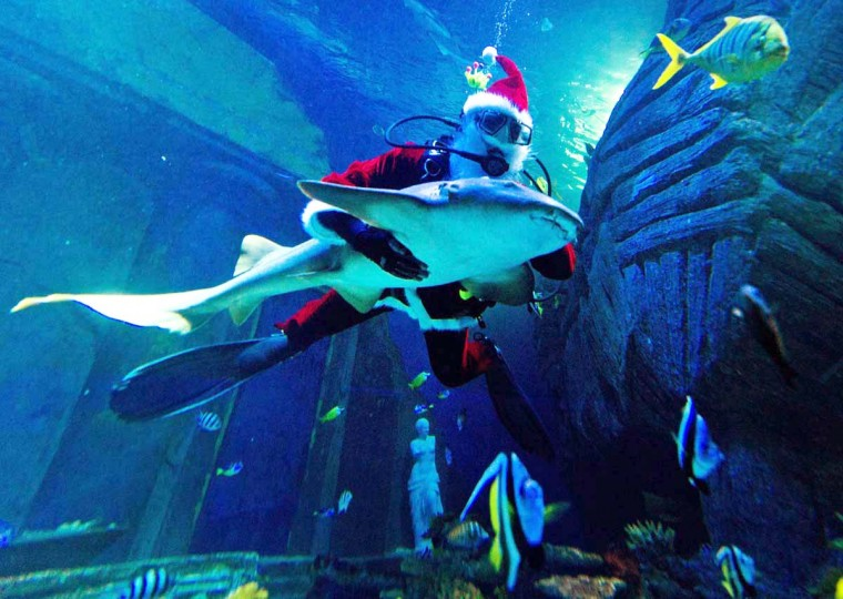 A Santa Claus dives with a nurse shark in the Sea-Life-Aquarium in Munich, southern Germany. On December 6 people in Germany celebrate the day of Santa Claus. (Peter Kneffel/Getty Images)