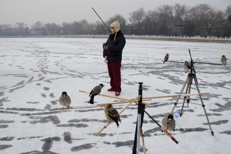 A Chinese man plays with his pet bird on a frozen lake in Beijing on December 19, 2012. China will allow transit passengers from 45 countries including the US, Canada and all members of the EU to spend up to 72 hours in Beijing without a visa from January 2013, city authorities said. (Wang Zhao/AFP/Getty Images)