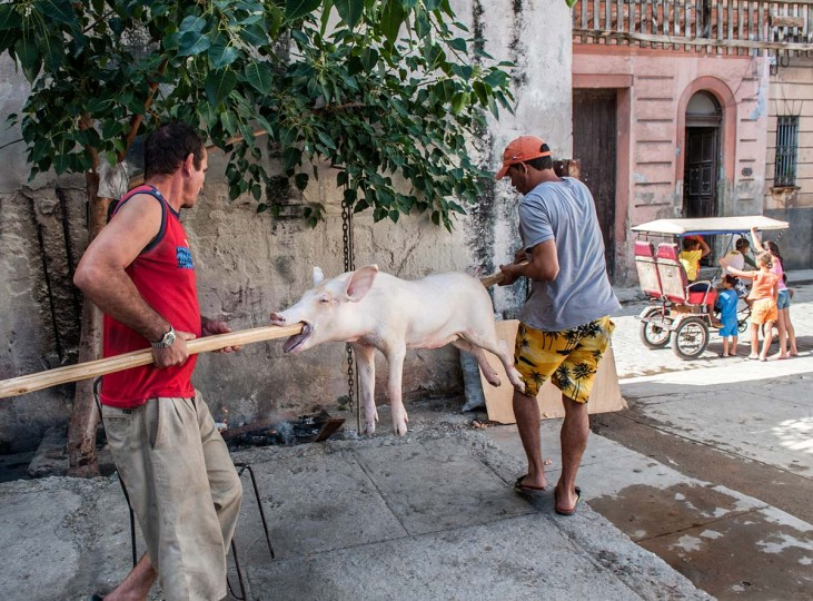 Two men carry a pig to be roasted for New Year's Eve celebrations in Havana on December 31, 2012. (Yamil Lagey/AFP/Getty Images)