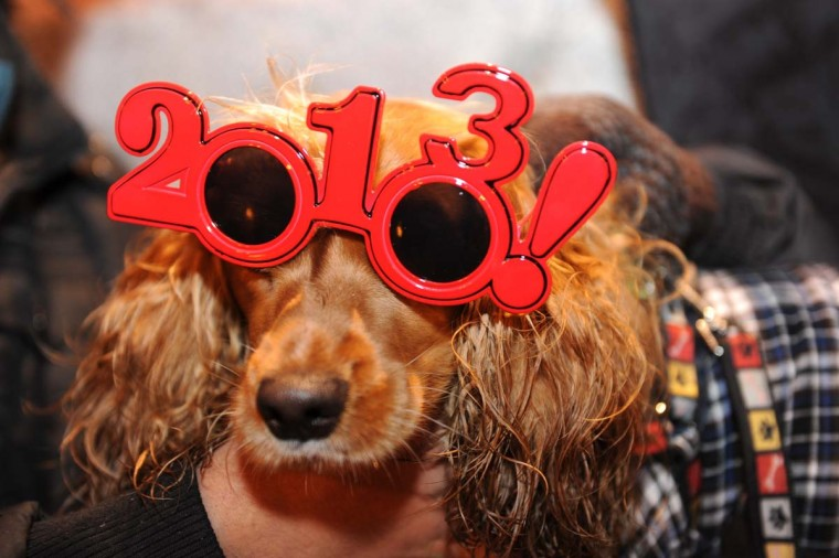 A dog wearing 2013 glasses poses as he celebrates the beginning of New Year's Day in Puerta del Sol in Madrid on December 31, 2012. (Dominique Faget/AFP/Getty Images)