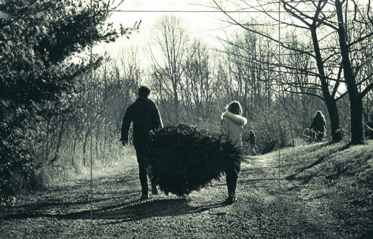 Joe and Donna Roberts of Timonium carry the first Christmas tree of their young married lives at the Locksley Tree Farm in the Jacksonville area of Baltimore. Dec. 14, 1981. (Jed Kirschbaum/Baltimore Sun)