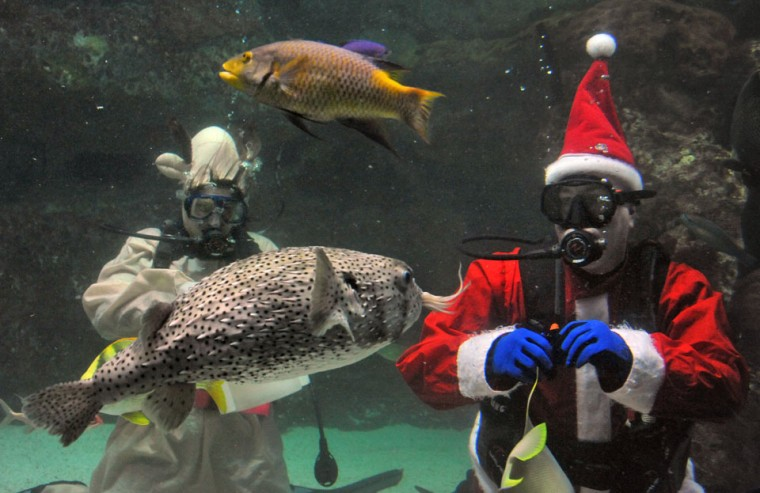 Dec. 14: Scuba Claus: Volunteer divers are Amanda Pack, in reindeer outfit at left, and Paul Silber, Santa, right. Santa appeared (with three fellow volunteer scuba divers, two as elves and one as a reindeer) for a preview of the National Aquarium's holiday celebration this weekend. For his Santa role, volunteer diver Paul Silber reported it was necessary to trim his beard. (Amy Davis/ Baltimore Sun)