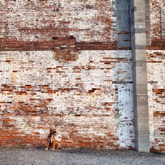 #baileystraightchillin – This is the photo that started the whole series. I was walking with Bailey in Harbor East, saw this wall and took his photo. I thought it looked cool, and so did a lot of other people, so I stuck with it, which I am glad I did! (Credit: Josh Flynn)