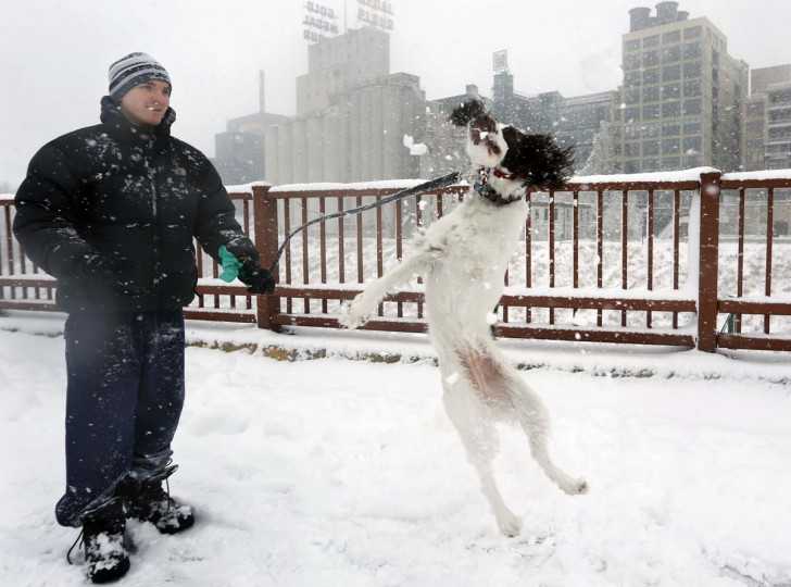 In Minneapolis on the Stone Arch Bridge, Adam Womersley and his English Springer Spaniel, Stella, took to the snow with relish, Sunday, December 9, 2012. (Richard Tsong-Taatarii/Minneapolis Star Tribune)
