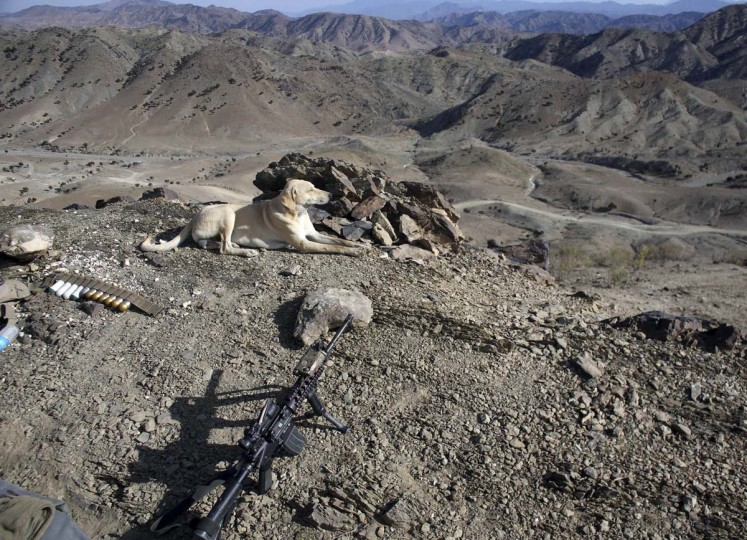 A dog is seen at a U.S soldiers position at a hill top near town of Walli Was in Paktika province near border with Pakistan November 6, 2012. (Goran Tomasevic/Reuters)