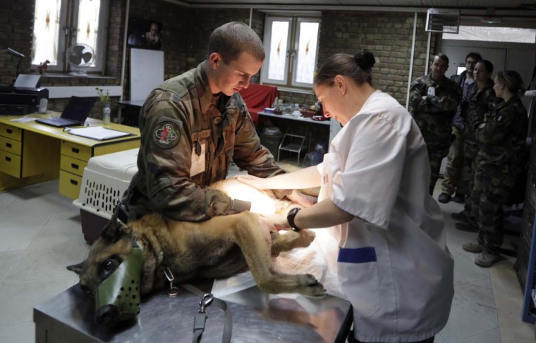 A veterinary surgeon treats a security dog in a French military base in Kabul November 18, 2012. (Eric Gaillard/Reuters)