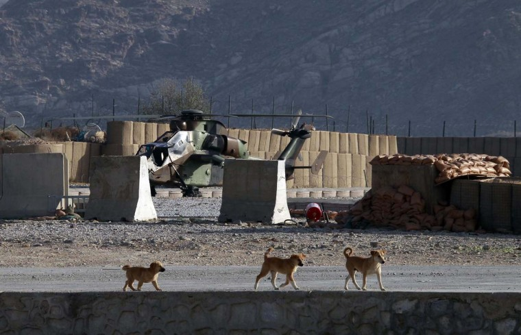 Three dogs walk past a French Tiger helicopter before the handover ceremony between the French army and the ANA (Afghan National Army) at the forward operational base of Nijrab, as part of the withdrawal of French troops, November 20, 2012. French combat troops are due to pull out of Afghanistan by the end of the year. (Eric Gaillard/Reuters)