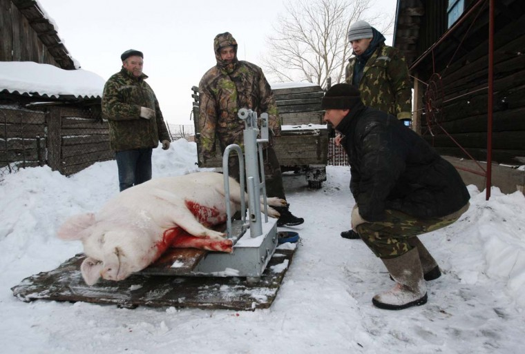 Men weigh a slaughtered pig in the village of Novoelnia, some 106 miles southwest of Minsk, December 23, 2012. Belarussians kill their pigs for Christmas and New Year celebrations at the end of December. (Vladimir Nikolsky/Reuters)