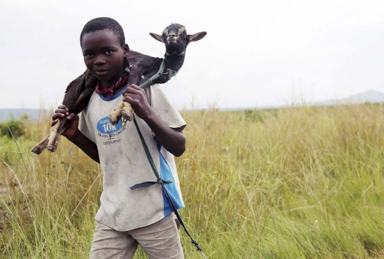 A boy carries a goat along a road near the town of Sake, 7 miles west of Goma November 27, 2012. (Goran Tomasevic/Reuters)