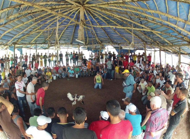 People watch a cock fight at an illegal arena set up in the bush on the outskirts of Havana June 16, 2012. In Cuba, it's legal to train cocks to fight but since the 1959 Cuban Revolution all forms of betting and gambling have been strictly forbidden. But betting on cock fights is an activity so popular among Cubans that stopping it would pose a huge challenge for the authorities and would be counterproductive to keeping law and order. Picture taken June 16, 2012. (Desmond Boylan/Reuters)