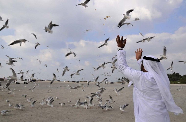 A man throws bread to seagulls at a beach in Jumeirah in Dubai, December 31, 2012. (Jumana El Heloueh/Reuters)