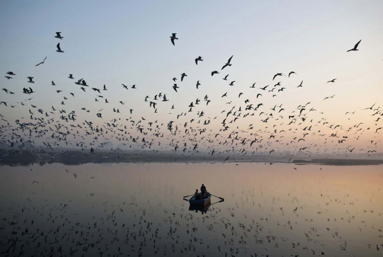 Migratory birds fly above men rowing a boat on the Yamuna river in the old quarters of Delhi. (Ahmad Masood/Reuters photo)