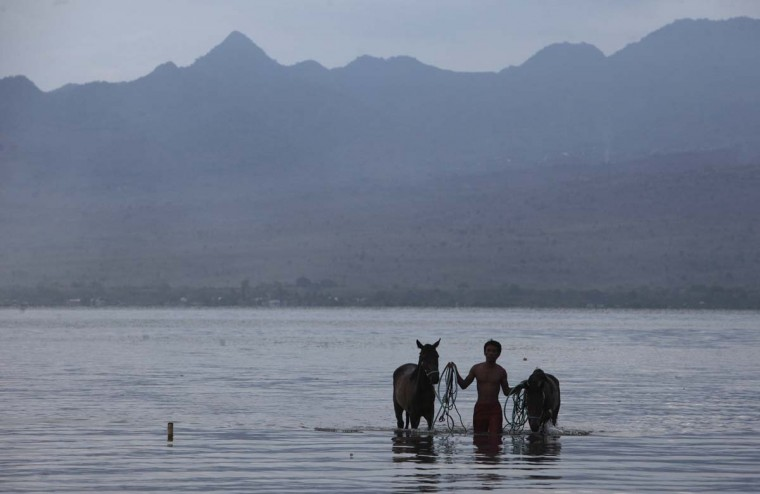 A man walks with his horses after washing them following a race at Kalaki beach on the outskirts Bima, on Indonesia's Sumbawa island, November 18, 2012. (Beawiharta/Reuters)