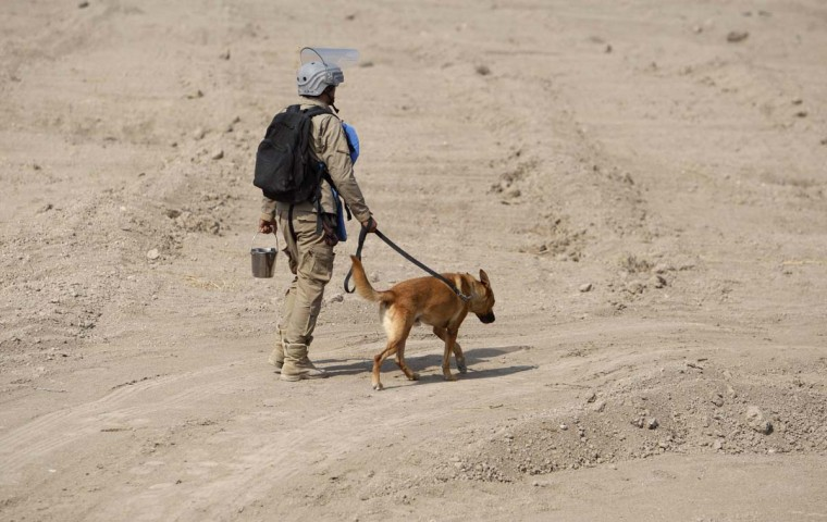 A member of the Iraqi Mine and Unexploded Ordnance Clearance Organization (IMCO) works with a sniffer dog to find mines in the Shatt-al-Arab district, in Iraq's southern city of Basra, November 6, 2012. Decades of war have left Iraq with one of the worst mine problems in the world, according to UNICEF, with around 20 million anti-personnel mines and more than 50 million cluster bombs believed to be left over in border areas and southern oilfields. (Atef Hassan/Reuters)