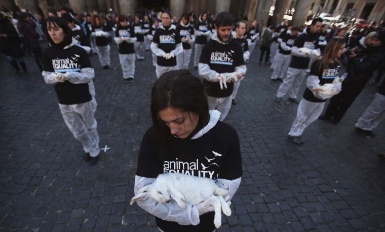 An activist holds a dead rabbit during the International Animal Rights Day downtown in Rome, December 9, 2012. (Yara Nardi/Reuters)
