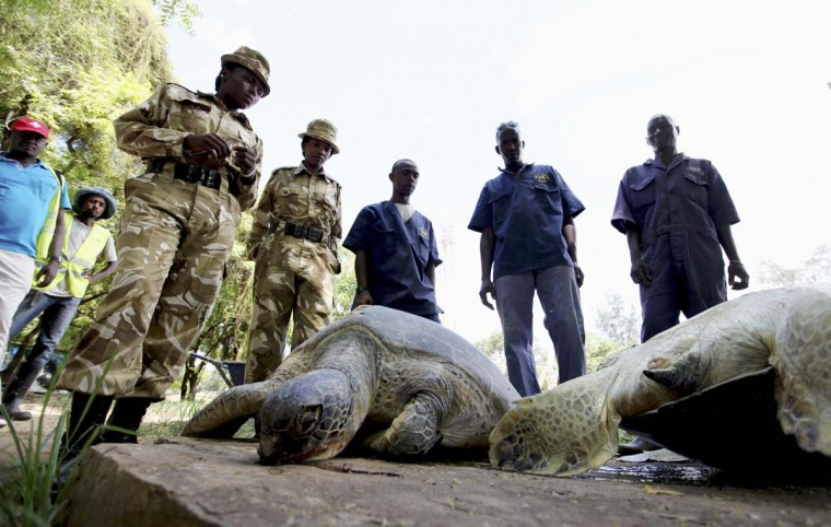 Kenya Wildlife Service officials stand next to turtles killed by poachers near the Jomo Kenyatta Public Beach at the coastal port town of Mombasa December 3, 2012. (Joseph Okanga/Reuters)