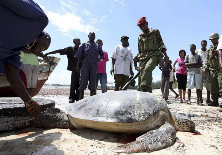 Kenya Wildlife Service officials and security personnel watch over one of three turtles killed by poachers near the Jomo Kenyatta Public Beach at the coastal port town of Mombasa December 3, 2012. (Joseph Okanga/Reuters)